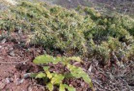 بازداشت آتشافروز جنگلهای گرگان؛ ۳۰ فقره آتشسوزی مهار شد