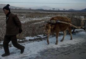 (تصاویر) زندگی روزمره ساکنان یک روستای در کره شمالی