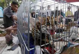 جمعآوری فروشندگان غیرمجاز پرندگان و حیوانات