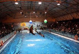 تعطیلی همیشگی دلفیناریوم برج میلاد | آخرین دلفین کجا رفت؟