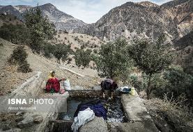 موزه درختان بلوط دنیا در حال خشکیدن