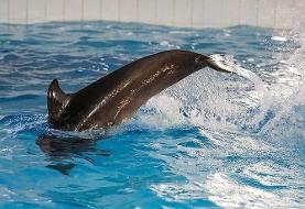 (تصاویر) انتقال تنها دلفین برج میلاد به کیش