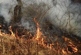 پارک ملی گلستان دوباره طعمه آتش شد