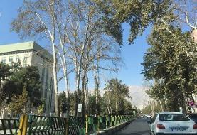 آغاز کاشت ۳۰۰ درخت چنار در مرکز شهر تهران