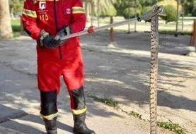 مار خطرناک بزرگ در دانشگاه چمران (عکس)