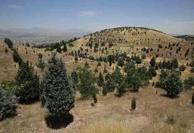 کاشت درختچههای سماق و زرشک در لواسانات