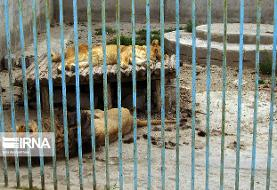 موضوع فیلم منتشر شده از باغ وحش ارومیه در حال پیگیری است