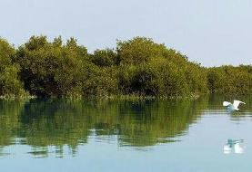 خطر جدی تخریب جنگلهای حرّا و بیم کوچ همیشگی پرندگان