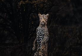 (تصاویر) زل زدن حیوانات وحشی به دوربین!