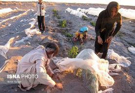 (تصاویر) خسارات طوفان شن در جنوب کرمان