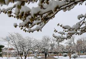 برف و باران در نیمی از کشور