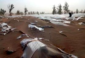 خسارت ١٢٠ میلیارد تومانی توفان شن به کشاورزان جنوب سیستان و بلوچستان