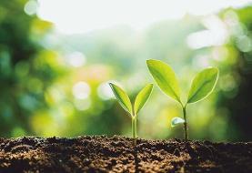 سبزاندیشی، عاملی کلیدی در پایداری مشاغل
