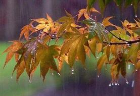 «باران» در شمال و «گردوخاک» در شرق/سردترین استان کشور