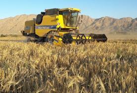 رویترز: فشار واردات ۸ میلیون تن گندم به اقتصاد ایران