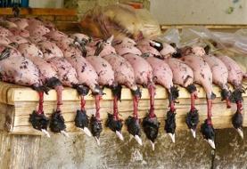 قتل عام پرندگان مهاجر در ایران