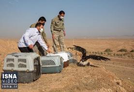 ویدئو / رهاسازی پرندههای مهاجر در تالاب بهشت معصومه قم