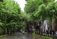 بارش باران در نقاط مختلف کشور