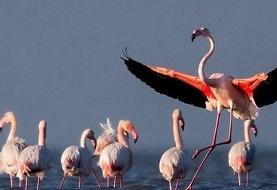 آخرین جزئیات از تلفات پرندگان مهاجر در میانکاله
