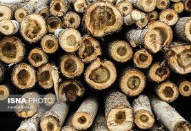 کشف ۳۵ تن چوب قاچاق در دشتستان