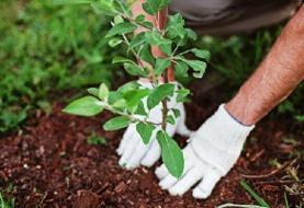 راهاندازی پویش مردمی درختیاری با حضور بیش از ۲۵۰ گروه مردمی