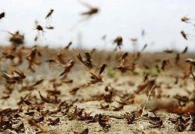 هجوم گسترده ملخ های صحرایی به کشور از حدود ۱۰ روز آینده
