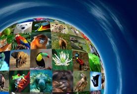 ضرورت توجه به تمام گونههای حیات وحش حتی مارمولک خانگی