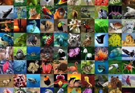 ایران جزو ۲۰ کشور غنی ازنظر تنوع زیستی و ژنتیکی