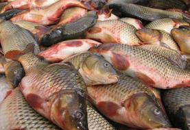 خداحافظی با ماهی شب عید   رشد ۲ برابری قیمت انواع ماهی