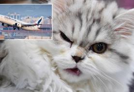فرود اضطراری هواپیما پس از حمله گربه به خلبان!
