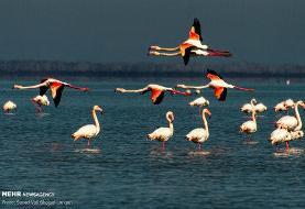 تصاویر   پایان مهاجرت پرندگان به میانکاله