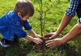 کاهش هزینههای گرمایش زمستانی با کاشت درختان