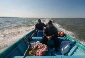 (تصاویر) پایان مهاجرت پرندگان به میانکاله