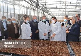 رفع تداخل ۵۰۰ هزار هکتار زمین کشاورزی به نفع کشاورزان/ ضعف کشور در تولید نهال سالم