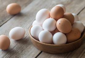 نرخ تخم مرغ شکست