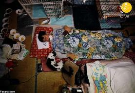 (تصاویر) مردی که گربههای فراموش شده فوکوشیما را نجات داد