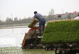 اولین نشاء مکانیزه برنج در مازندران/تصاویر