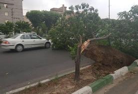 هشدار سازمان هواشناسی درباره وزش باد شدید، رگبار و رعد و برق