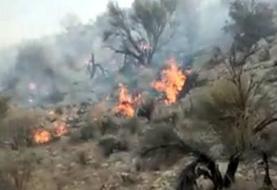 مهار آتشسوزی ۱۴ساعته در جنگلهای جهرم