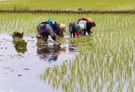 نوبتبندی آب سد سفیدرود برای مناطق بالادست گیلان