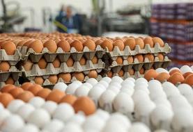 قیمت تخممرغ در میادین میوه و ترهبار تهران ارزان شد: هر شانه ۲۹۹۰۰ هزار تومان