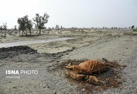 خشکسالی بیسابقه در مناطقی از کشور/هشدار مرکز ملی خشکسالی به مسئولان آب