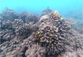 فاجعه محیط زیستی در جزیره خارک