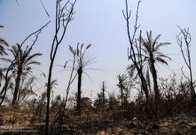 جزئیات آتش سوزی گسترده در اهواز/۱۰۰ درخت نخل آتش گرفتند