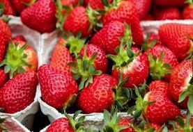 خواص شگفتانگیز توتفرنگی | خوردن توتفرنگی به چه کسانی توصیه نمیشود؟