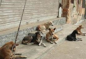 یک تصمیم جدید برای سگ های بدون صاحب اهواز