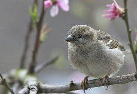 زمین زیستگاه ۵۰ میلیارد پرنده وحشی است
