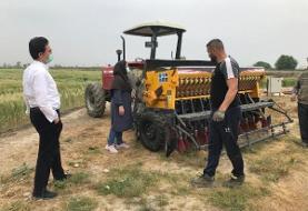جرقههای کشت بدون آب برنج در شرق مازندران