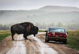 دنیای حیوانات؛ از ملاقات در جاده تا مکانی متفاوت برای استراحت! (+عکس)