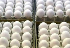 کاهش تولید تخم مرغ در کشور
